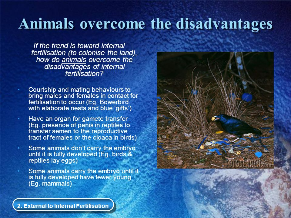 Animals overcome the disadvantages