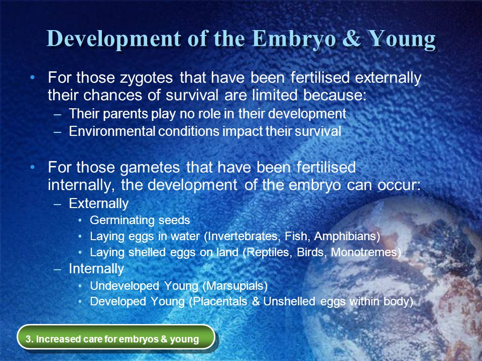 Development of the Embryo & Young