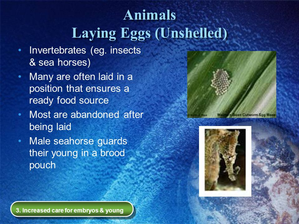 Animals Laying Eggs (Unshelled)