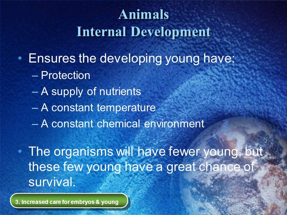 Animals Internal Development