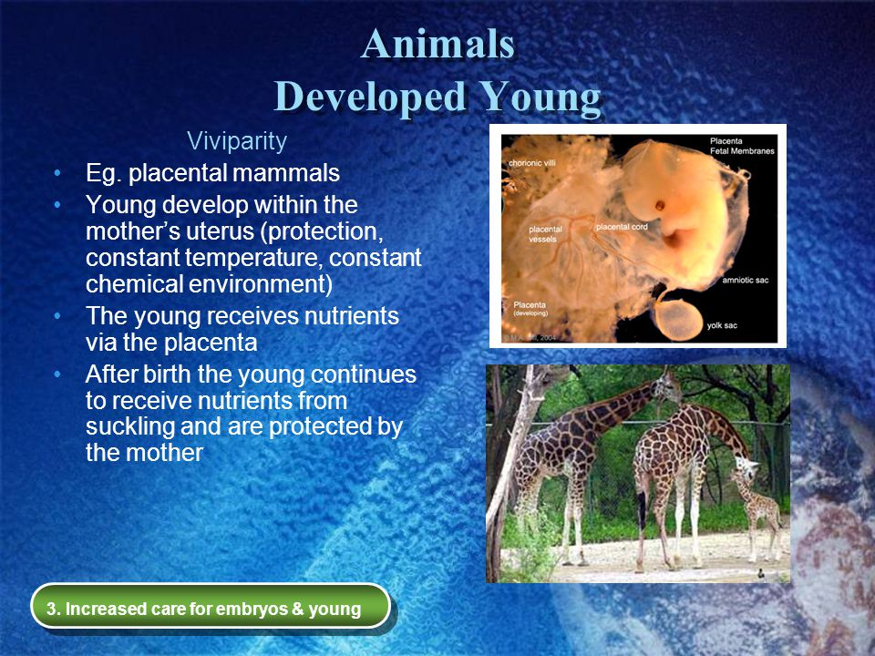 Animals Developed Young
