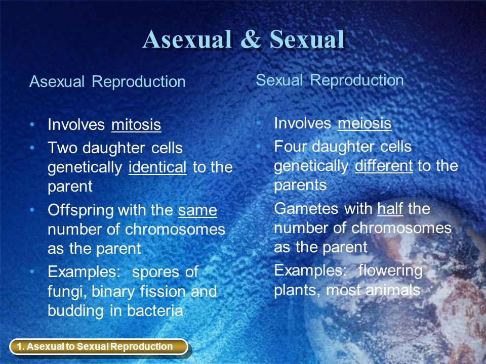 Asexual & Sexual Sexual Reproduction Asexual Reproduction