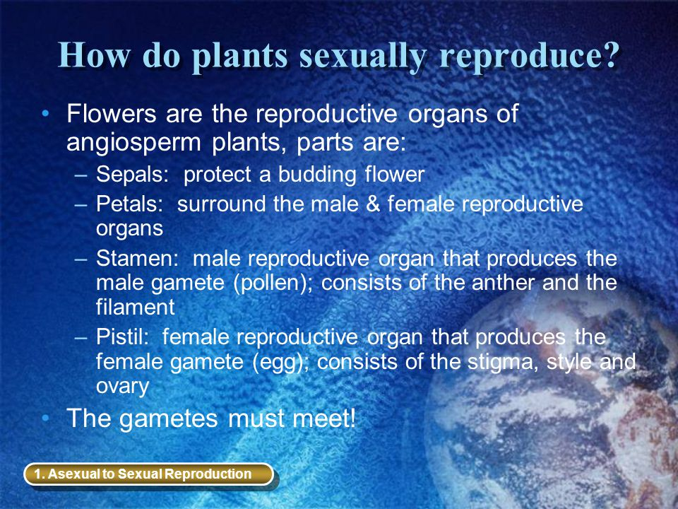 How do plants sexually reproduce