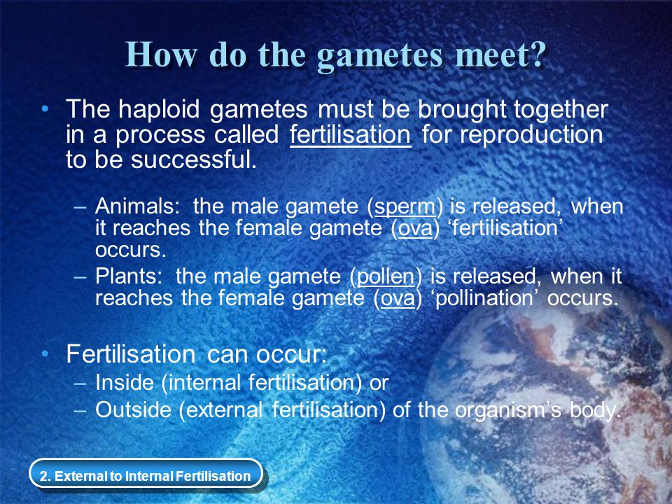 How do the gametes meet The haploid gametes must be brought together in a process called fertilisation for reproduction to be successful.