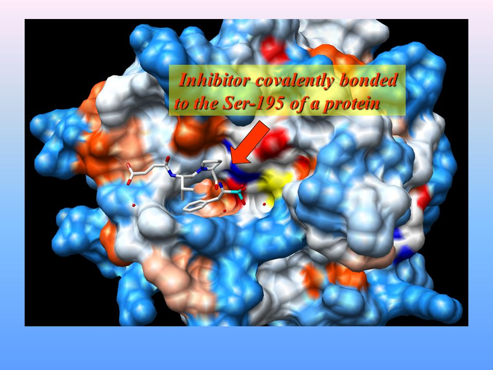 Inhibitor covalently bonded to the Ser-195 of a protein