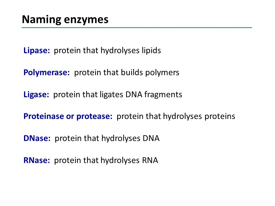 Naming enzymes Lipase: protein that hydrolyses lipids