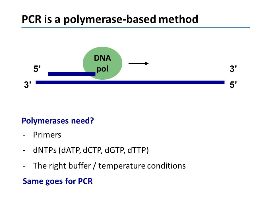 PCR is a polymerase-based method