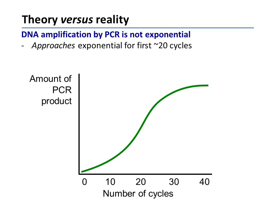 Theory versus reality DNA amplification by PCR is not exponential