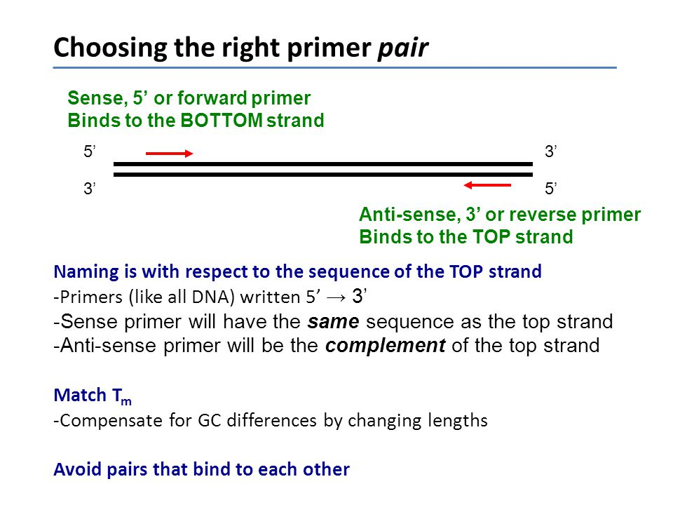Choosing the right primer pair
