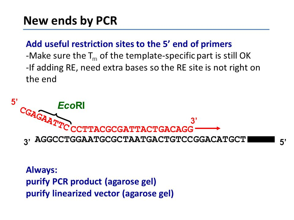 New ends by PCR Add useful restriction sites to the 5' end of primers