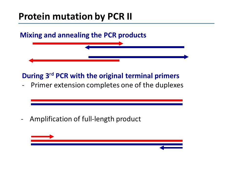 Protein mutation by PCR II