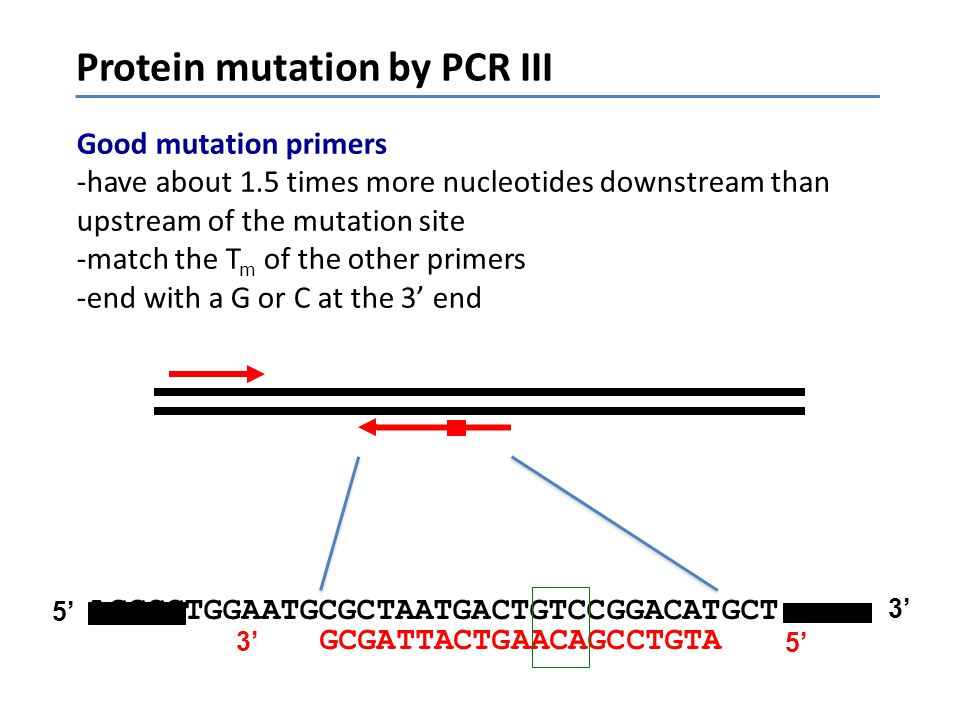 Protein mutation by PCR III