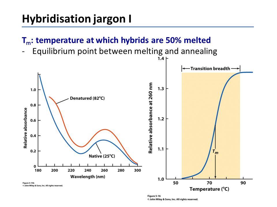 Hybridisation jargon I