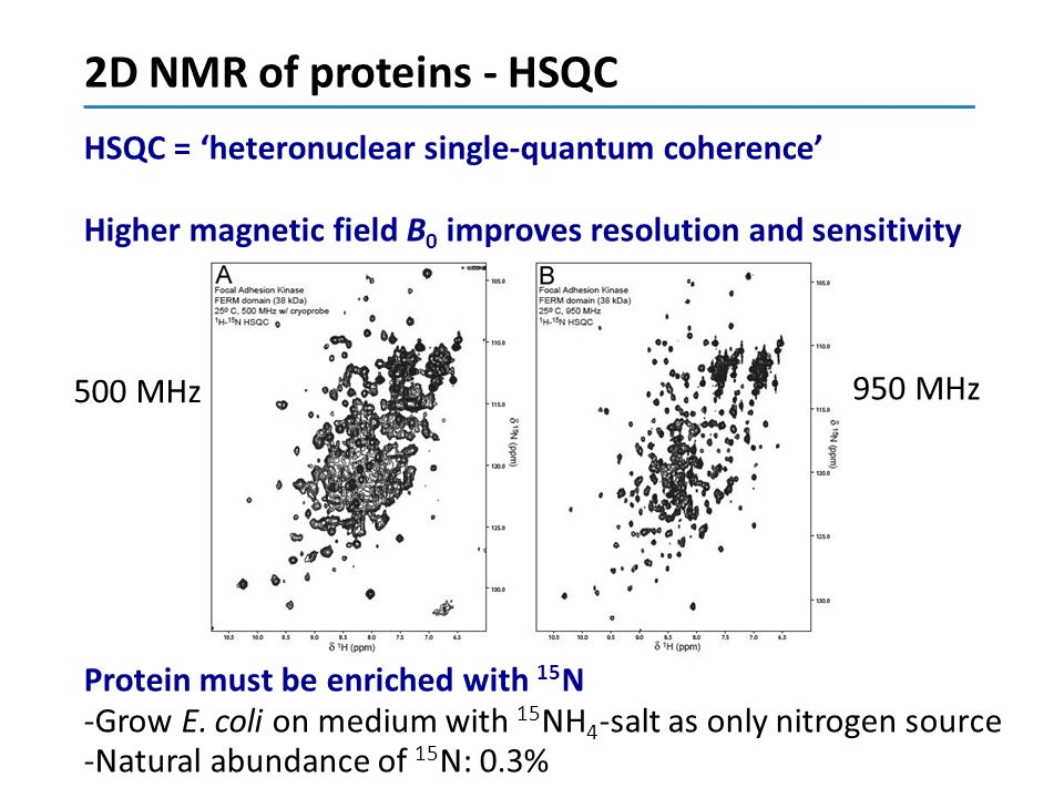 2D NMR of proteins - HSQC HSQC = 'heteronuclear single-quantum coherence' Higher magnetic field B0 improves resolution and sensitivity.