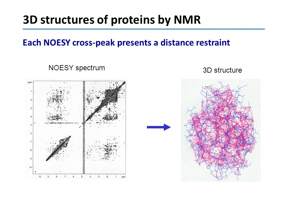 3D structures of proteins by NMR