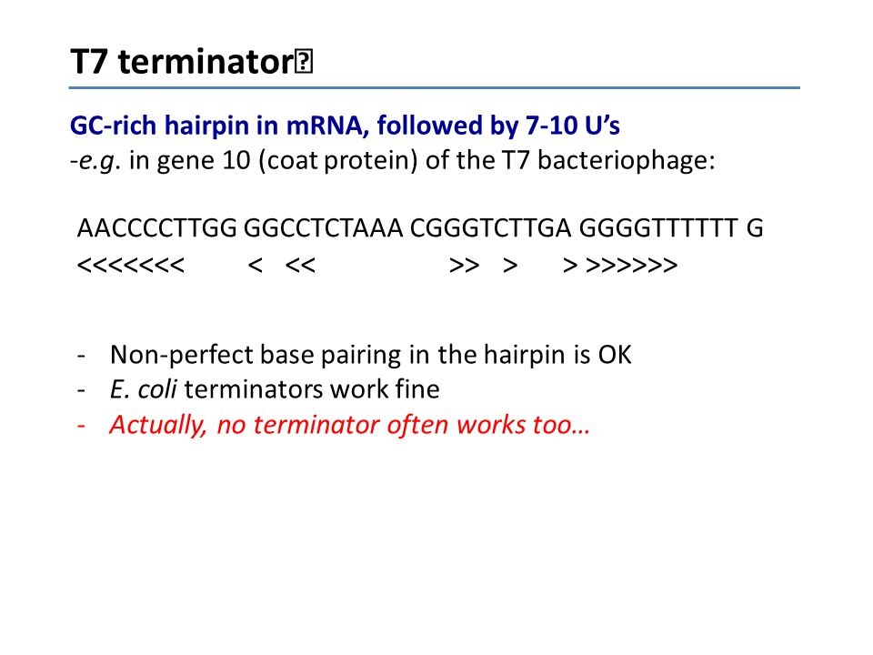 T7 terminator GC-rich hairpin in mRNA, followed by 7-10 U's. e.g. in gene 10 (coat protein) of the T7 bacteriophage: