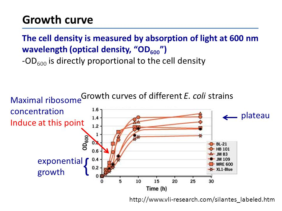 Growth curve The cell density is measured by absorption of light at 600 nm. wavelength (optical density, OD600 )