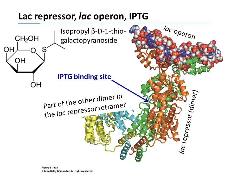 Lac repressor, lac operon, IPTG