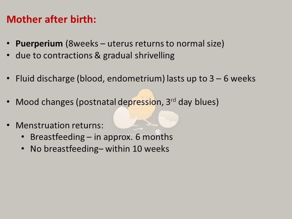 Mother after birth: Puerperium (8weeks – uterus returns to normal size) due to contractions & gradual shrivelling.