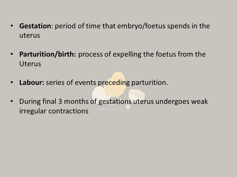 Gestation: period of time that embryo/foetus spends in the uterus