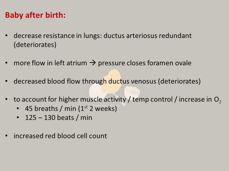 Baby after birth: decrease resistance in lungs: ductus arteriosus redundant (deteriorates) more flow in left atrium  pressure closes foramen ovale.