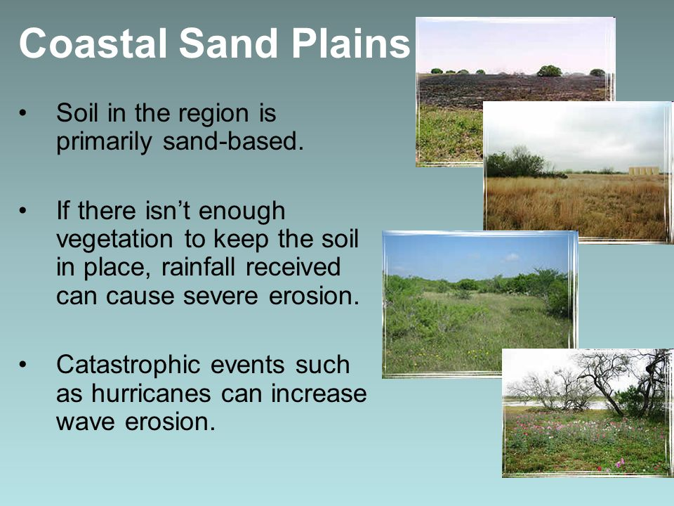 Coastal Sand Plains Soil in the region is primarily sand-based.