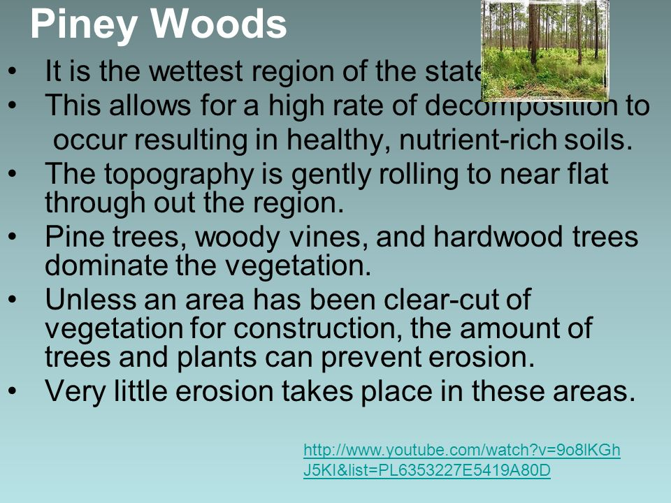 Piney Woods It is the wettest region of the state.