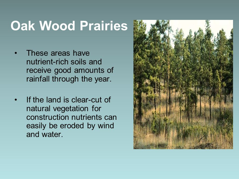 Oak Wood Prairies These areas have nutrient-rich soils and receive good amounts of rainfall through the year.