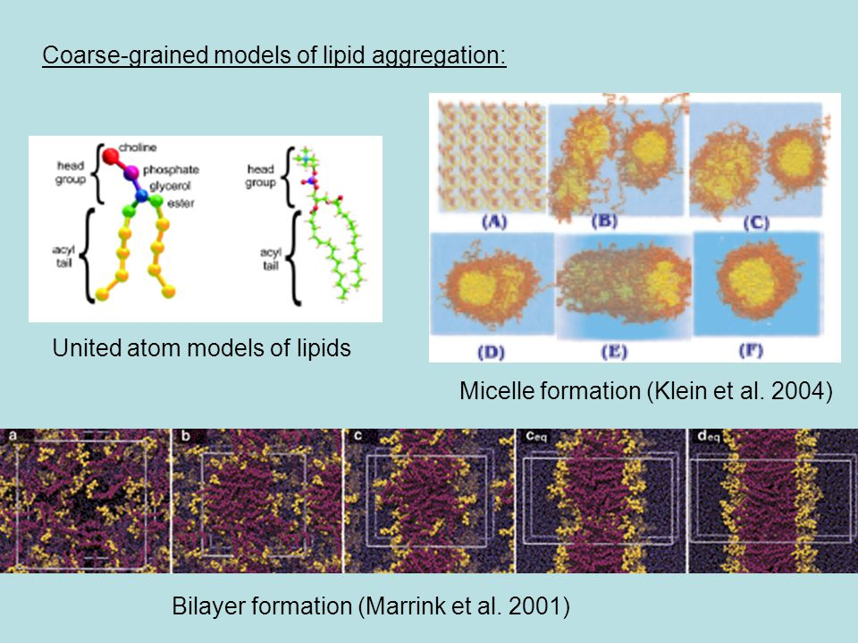 Coarse-grained models of lipid aggregation: