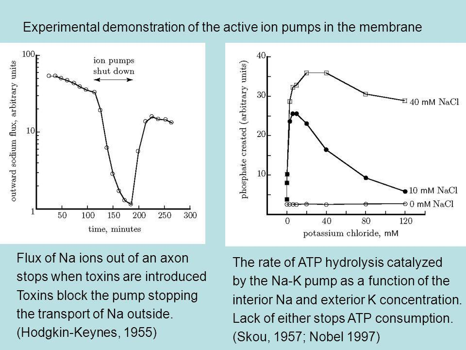 Experimental demonstration of the active ion pumps in the membrane