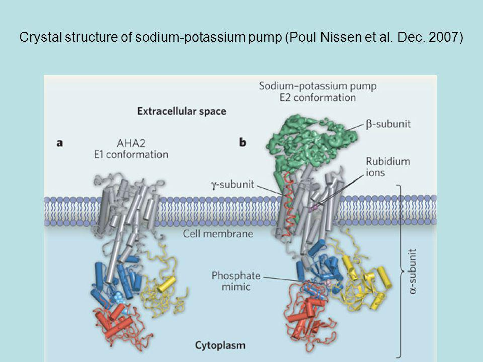 Crystal structure of sodium-potassium pump (Poul Nissen et al. Dec