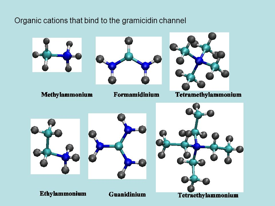 Organic cations that bind to the gramicidin channel