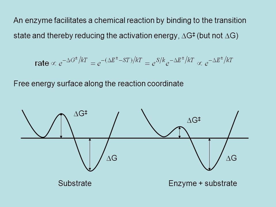 An enzyme facilitates a chemical reaction by binding to the transition
