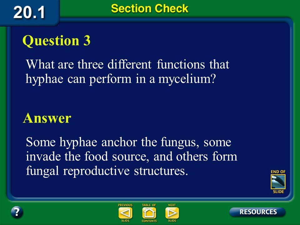 Question 3 What are three different functions that hyphae can perform in a mycelium Answer.