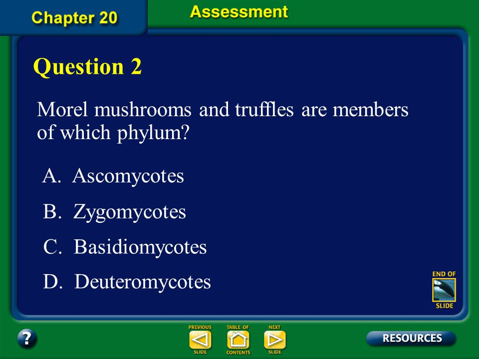Question 2 Morel mushrooms and truffles are members of which phylum