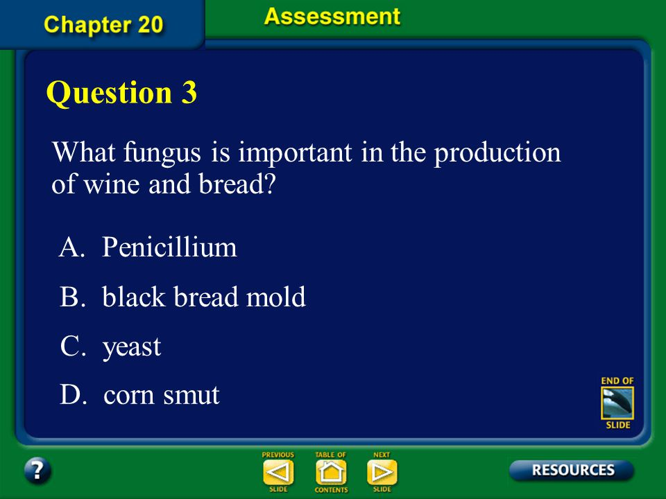 Question 3 What fungus is important in the production of wine and bread A. Penicillium. B. black bread mold.