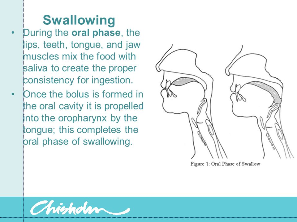 Swallowing During the oral phase, the lips, teeth, tongue, and jaw muscles mix the food with saliva to create the proper consistency for ingestion.