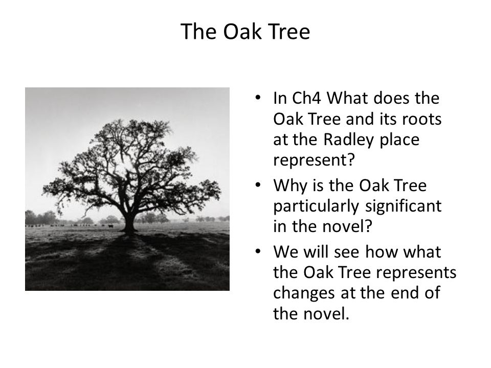 The Oak Tree In Ch4 What does the Oak Tree and its roots at the Radley place represent Why is the Oak Tree particularly significant in the novel