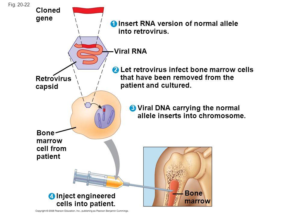 Insert RNA version of normal allele into retrovirus.