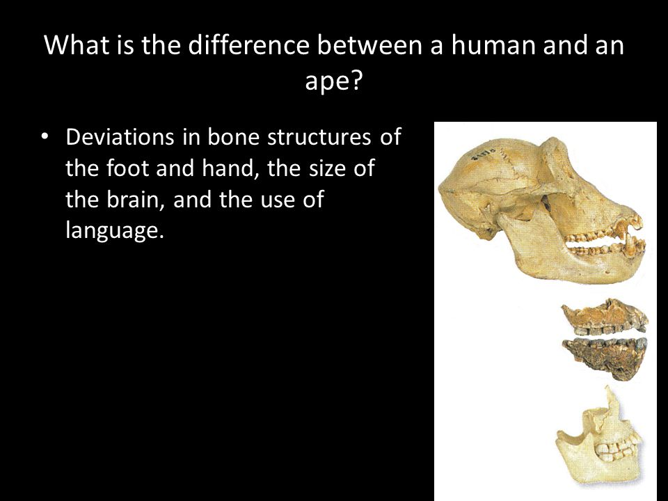 What is the difference between a human and an ape