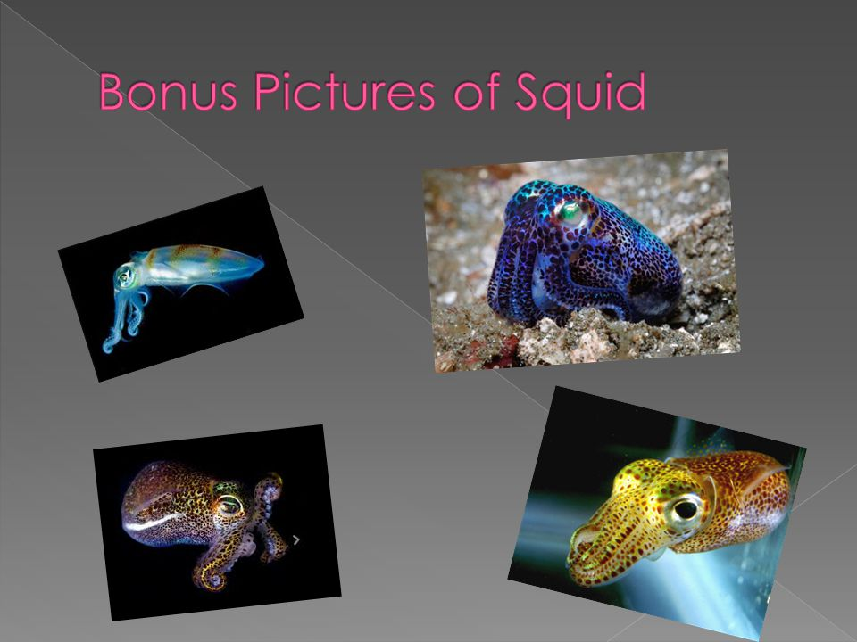 Bonus Pictures of Squid