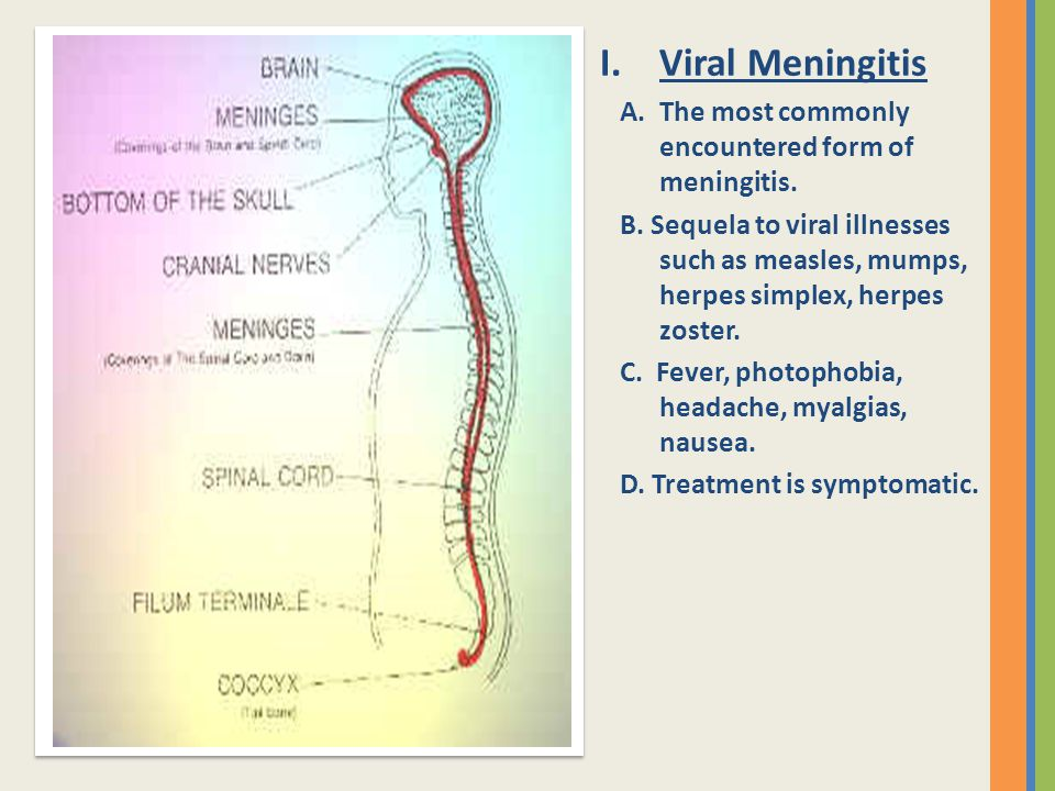 Viral Meningitis A. The most commonly encountered form of meningitis.