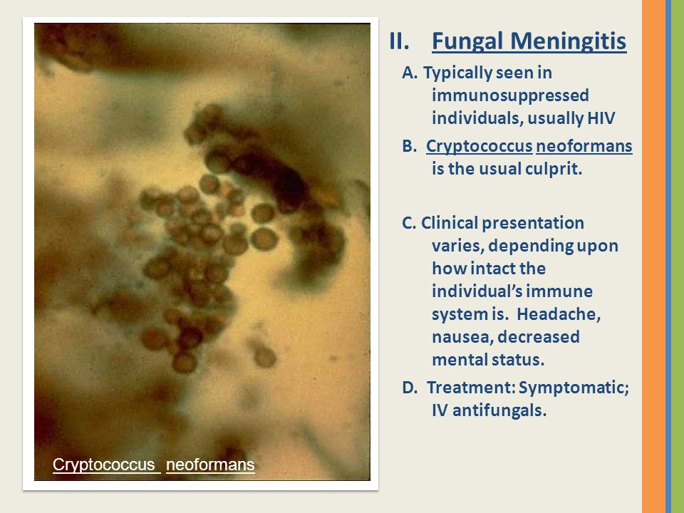 Fungal Meningitis A. Typically seen in immunosuppressed individuals, usually HIV. B. Cryptococcus neoformans is the usual culprit.