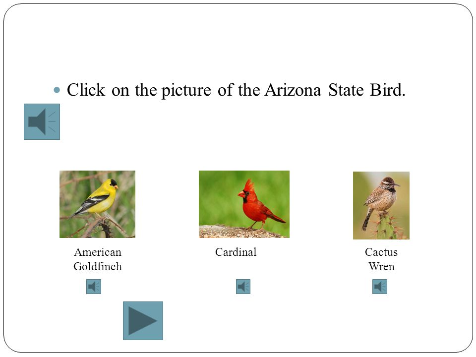 Click on the picture of the Arizona State Bird.