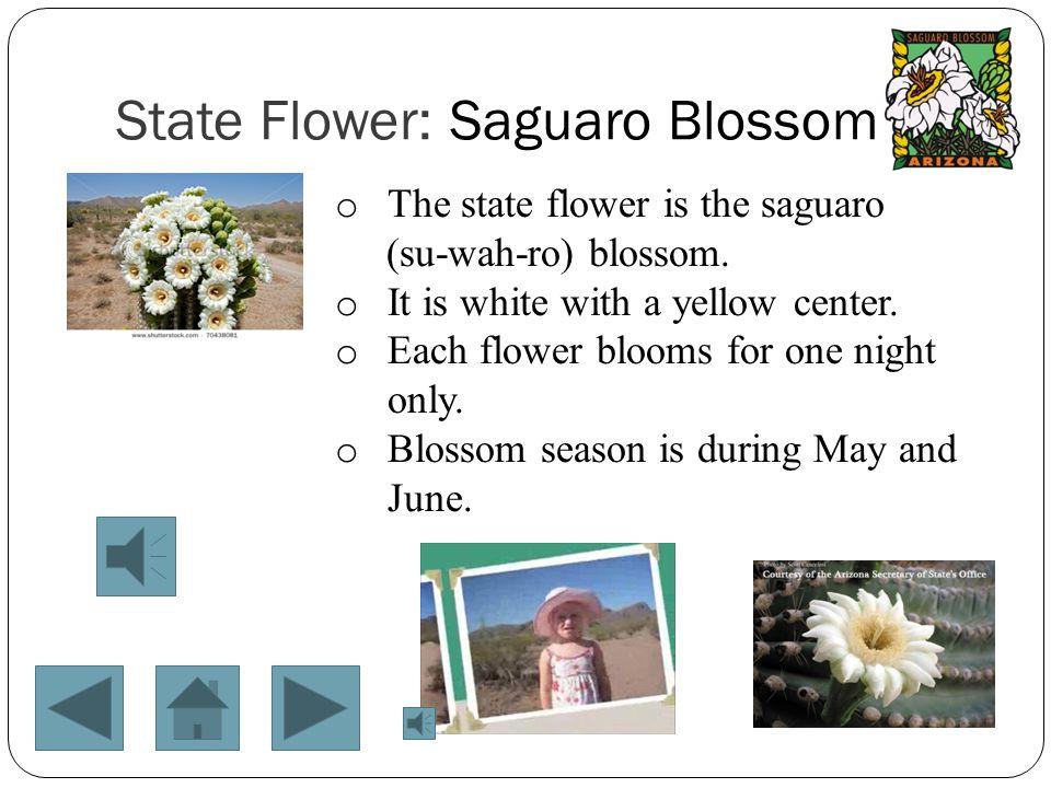 State Flower: Saguaro Blossom