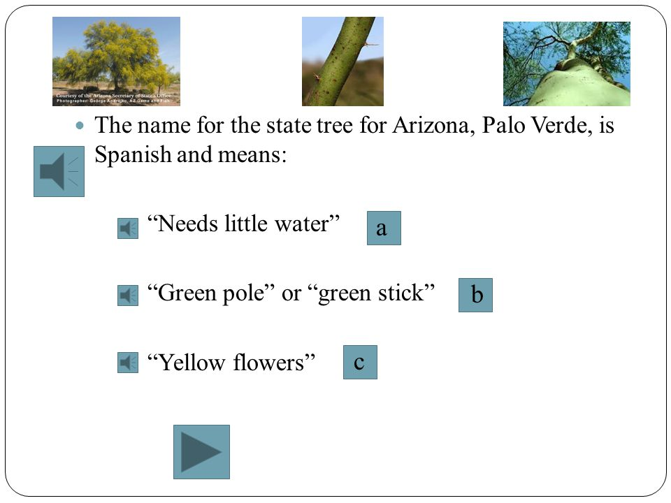 The name for the state tree for Arizona, Palo Verde, is Spanish and means:
