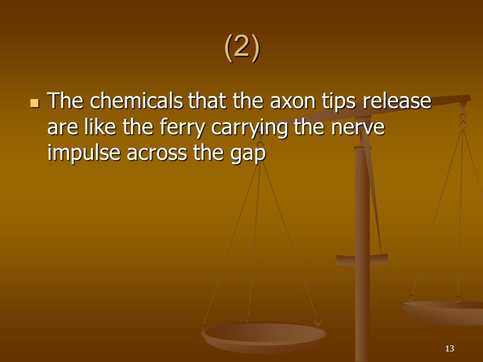 (2) The chemicals that the axon tips release are like the ferry carrying the nerve impulse across the gap.