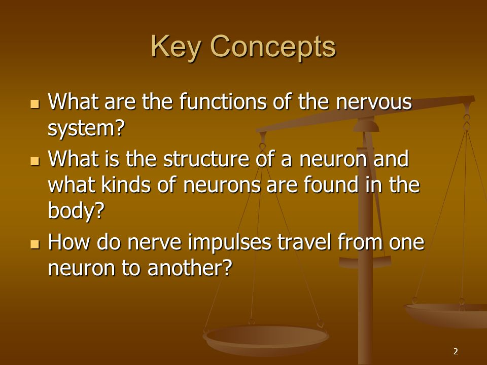 Key Concepts What are the functions of the nervous system