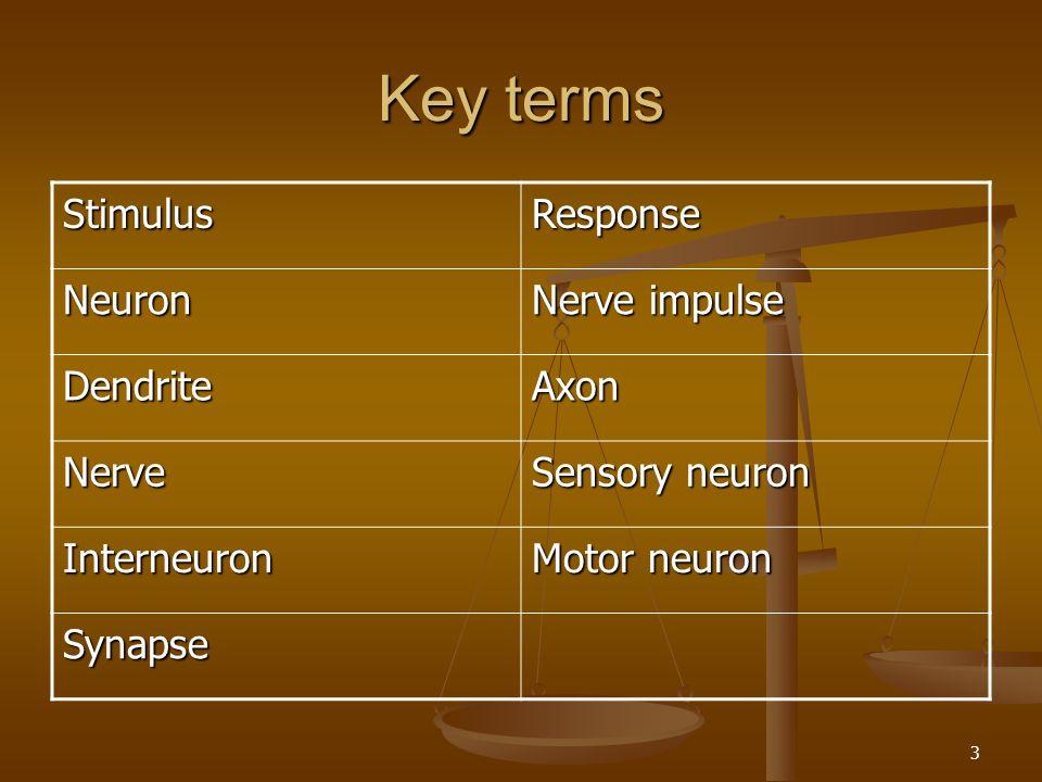 Key terms Stimulus Response Neuron Nerve impulse Dendrite Axon Nerve