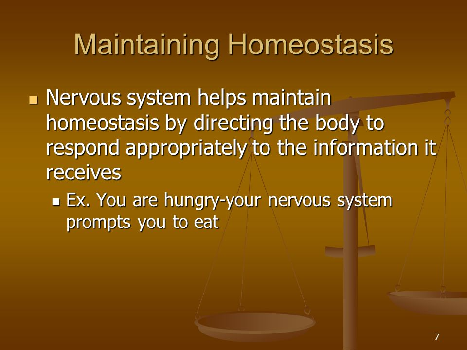 Maintaining Homeostasis